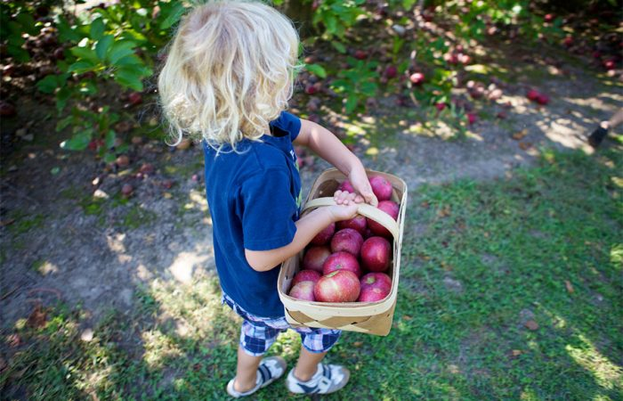 Best Apple Orchards around Toronto