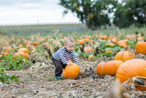 Ottawa Pumpkin Patches