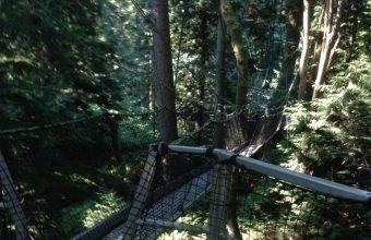 Vancouver TreeTop
