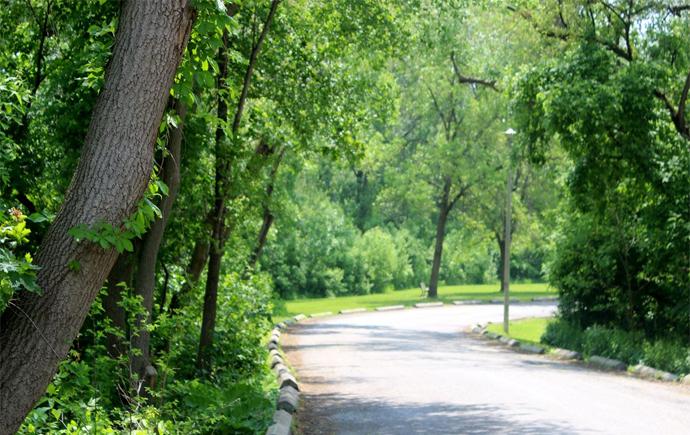 Best Picnic Spot in Toronto: King's Mill Park
