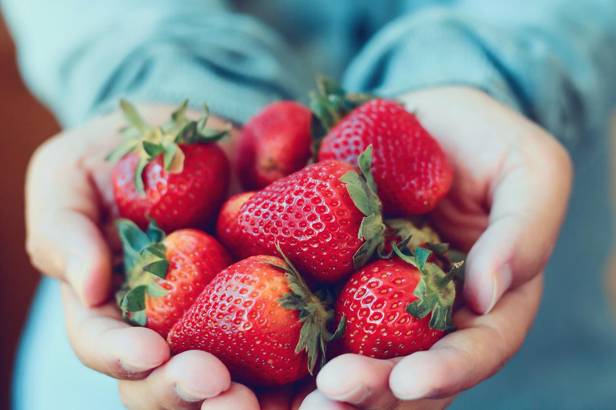 Strawberry Picking Ottawa