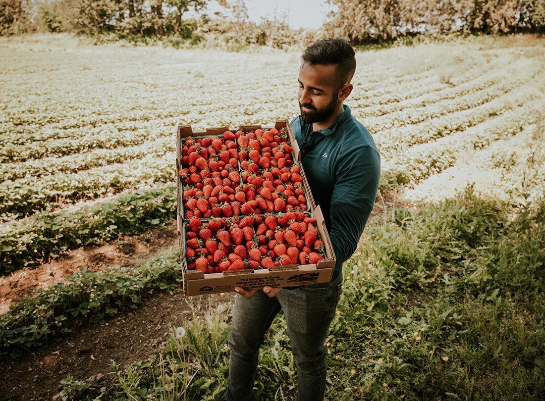 SavvyMom-Vancouver-Berry-Picking-Maan-Farms
