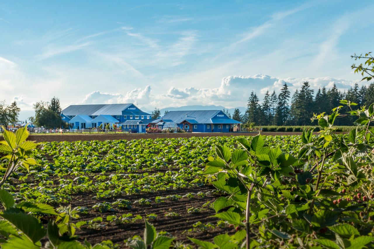 SavvyMom-Vancouver-U-Pick-Berry-Farms-Krause