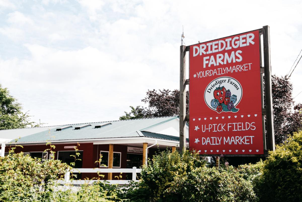 SavvyMom-Vancouver-U-Pick-Driediger-Farms