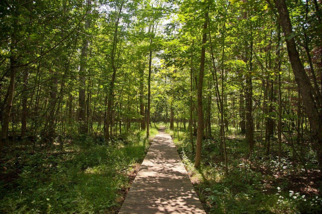 Best Parks and Picnic Spots in Ottawa - Lime Kiln Trail