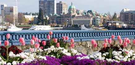 the_savvy_guide_to_March_in_Victoria