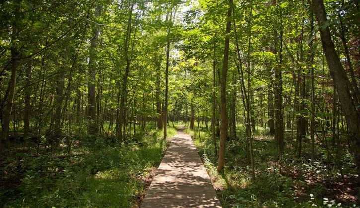 Image result for go for a walk in nature