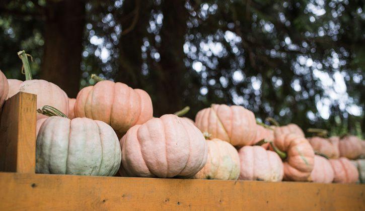 Vancouver Pumpkin Patches1
