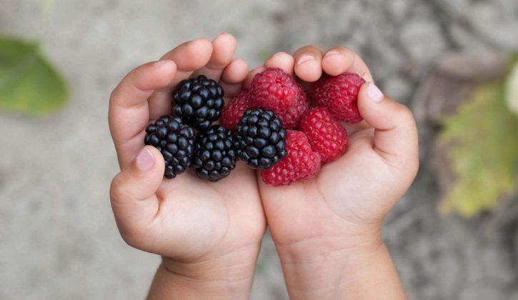 berry picking Calgary
