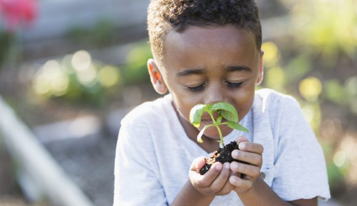 DIY Gardens for Kids