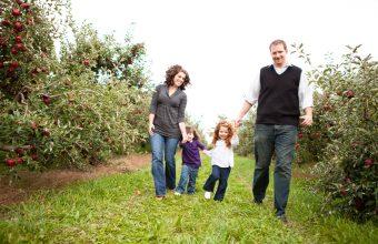 Apple Picking in Ottawa