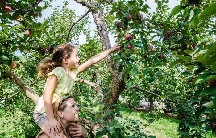 Apple Picking Near Toronto - SavvyMom