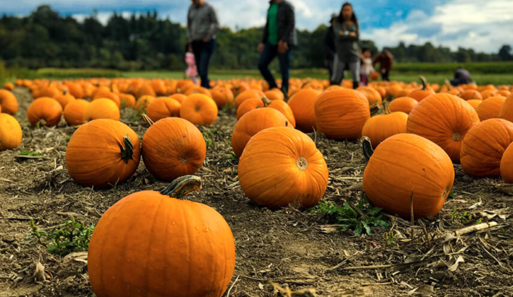 Pumpkin Patches in Calgary - SavvyMom