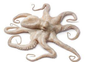 Octopus Mom