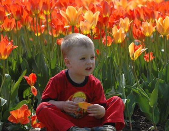 What to Do at Ottawa's Canadian Tulip Festival