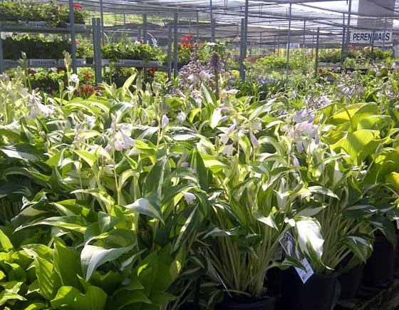 12 Nurseries and Garden Centres in Ottawa
