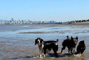 5 Pet Services in Vancouver