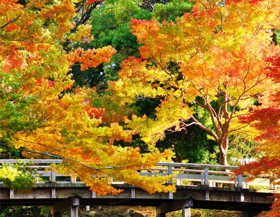 Where to See the Fall Foliage in Vancouver