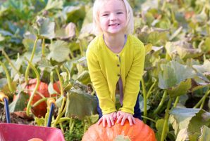 Perfect Pumpkin Patches in Toronto