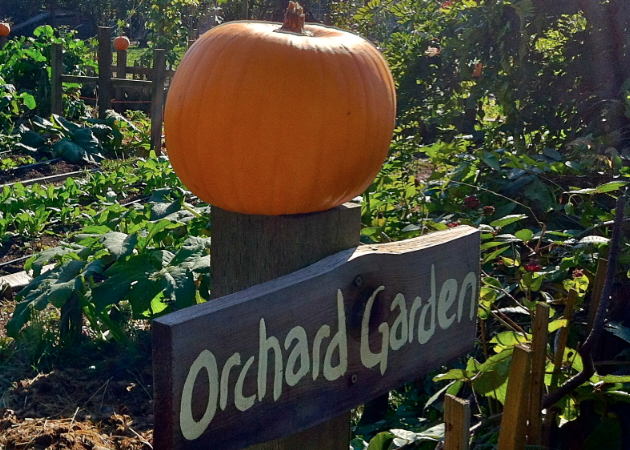Best-Pumpkin-Patches-Vancouver