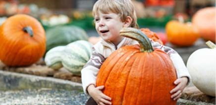 7_perfect_pumpkin_patches_in_ottawa