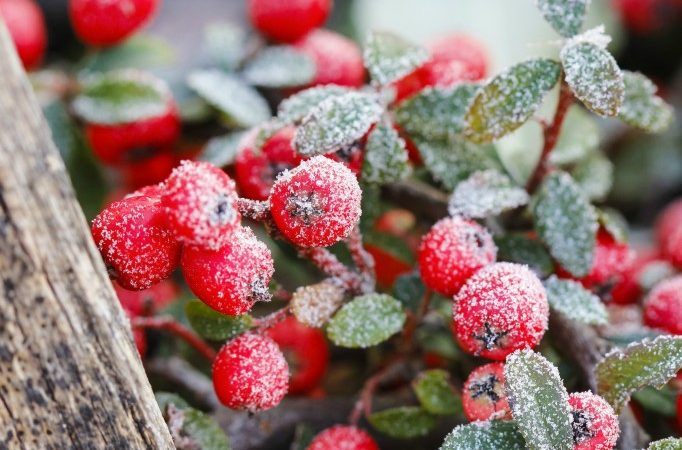 Gorgeous-Plants-for-Your-Winter-Garden-682x1024
