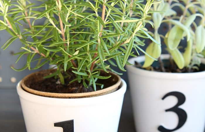diy-herb-pots-with-numbers-3