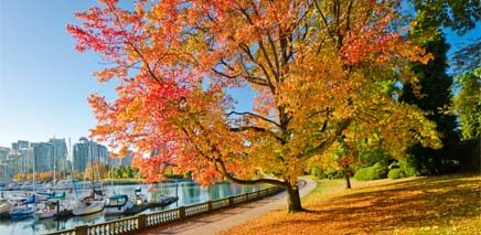 stanley_park_fall_colours_image_of_topic