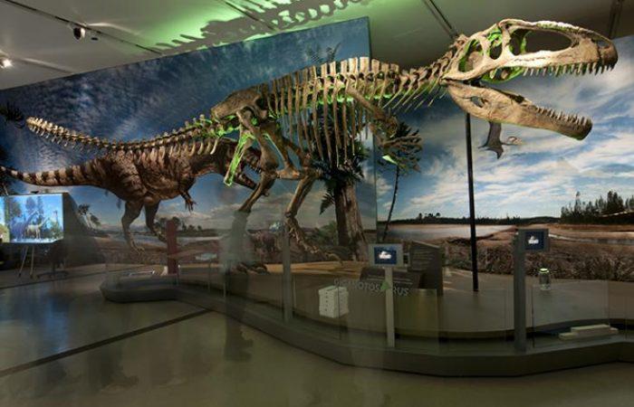 ultimate-dinosaurs-image-4_lg